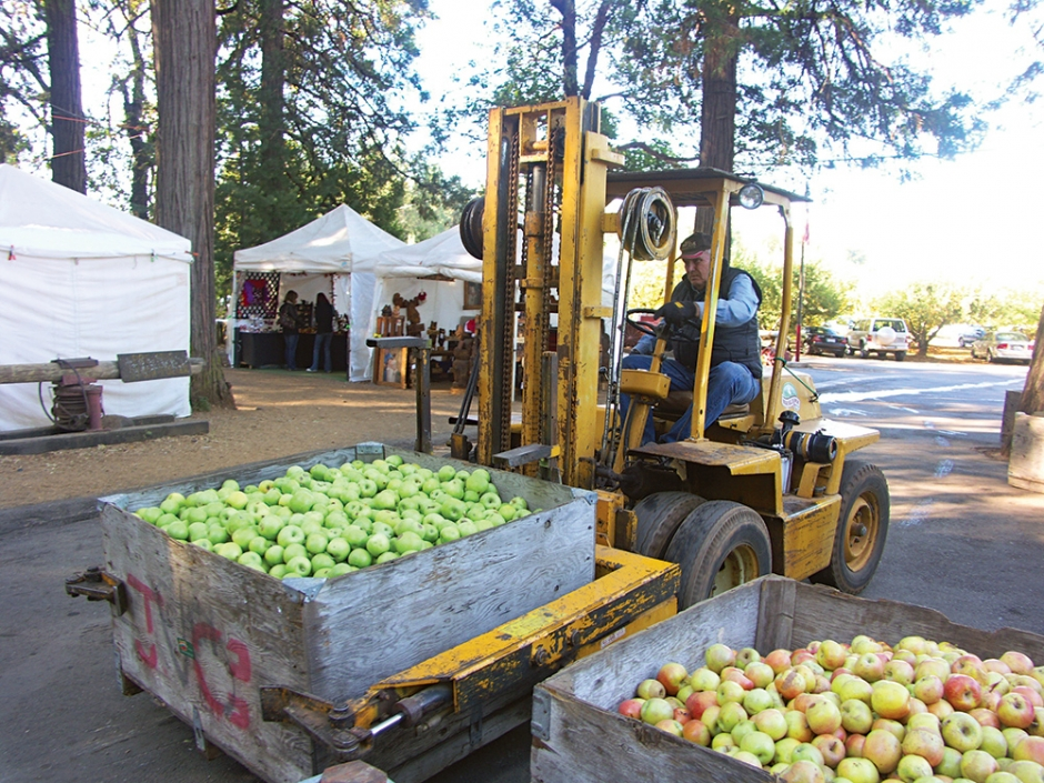 High Hill Ranch apples headed to be made into cider